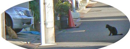nihiki_20101011175928.jpg