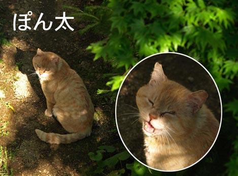 pon_20100602193521.jpg