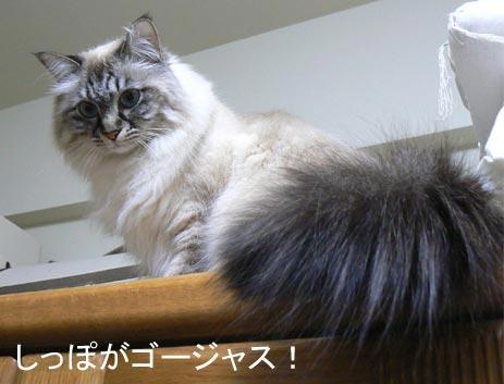 sippogaii_20100502143426.jpg