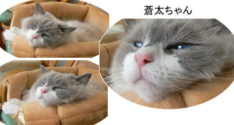 soyappu.jpg