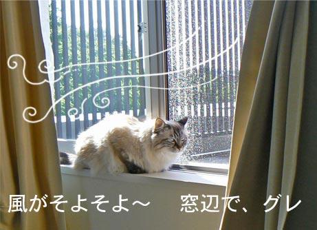 soyosoyo_20100606142420.jpg