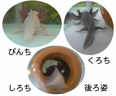 usirosugata_20100707205018.jpg