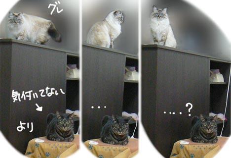 yorigure.jpg