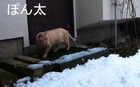 yukiyuki_20100420204214.jpg
