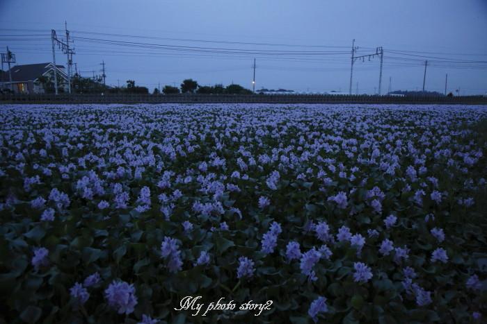 _N2A5966.jpg