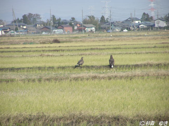 041203ojirowashiA1.jpg