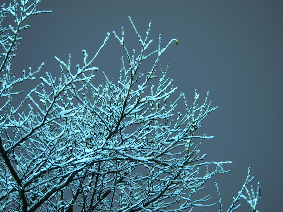 埼玉に雪が積もった日 2