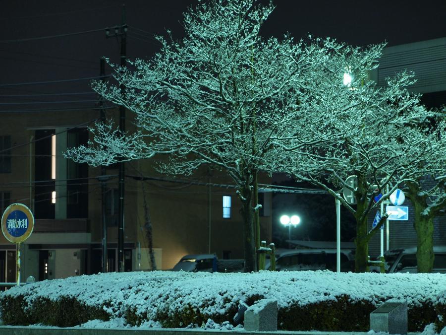 埼玉に雪が積もった日 7