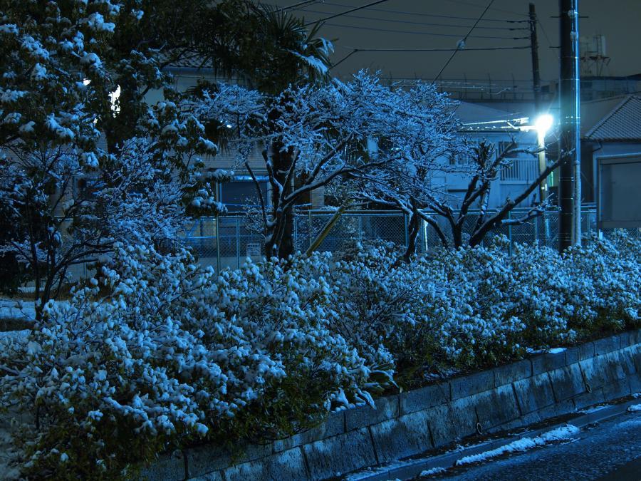 埼玉に雪が積もった日 9