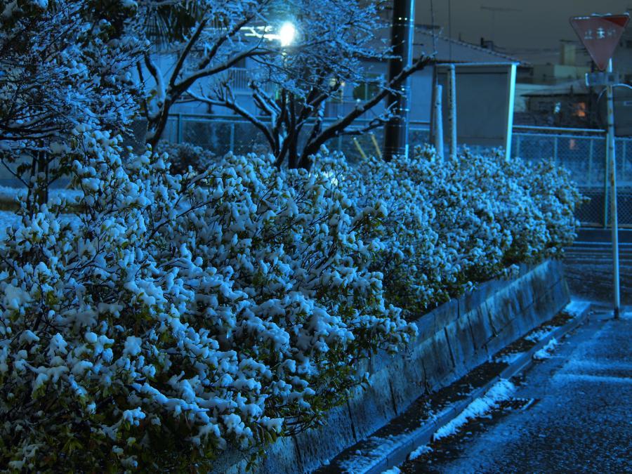 埼玉に雪が積もった日 10