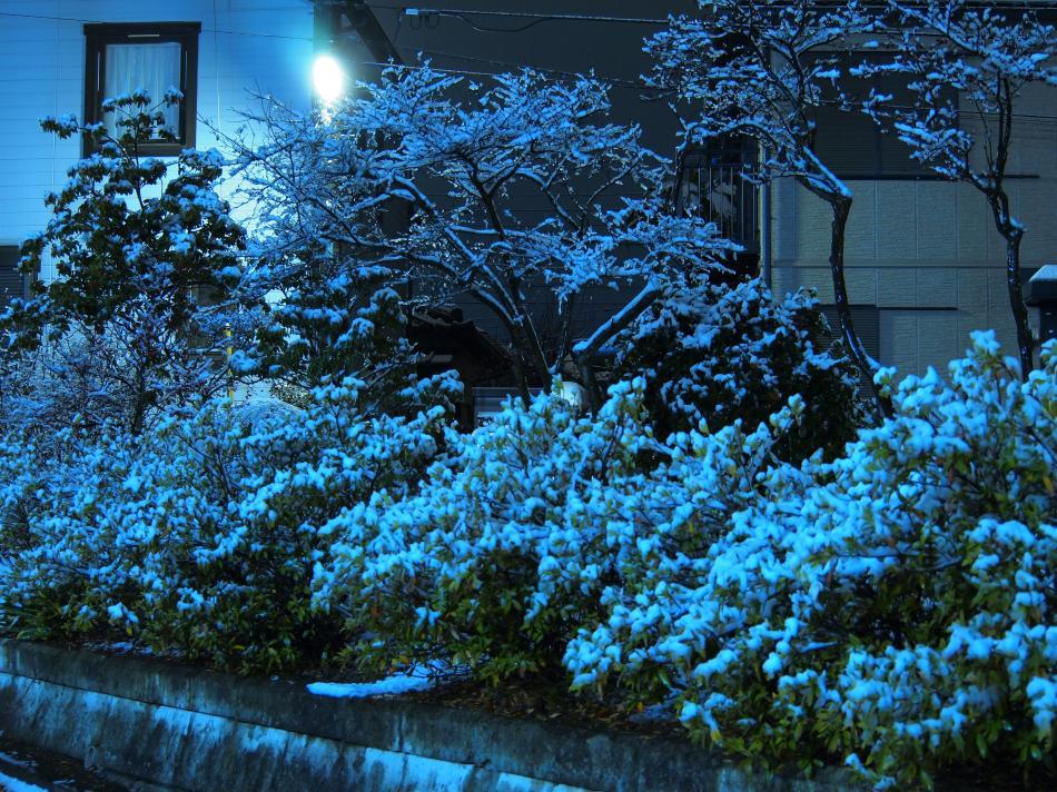 埼玉に雪が積もった日 11