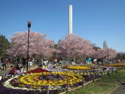 芦花公園①