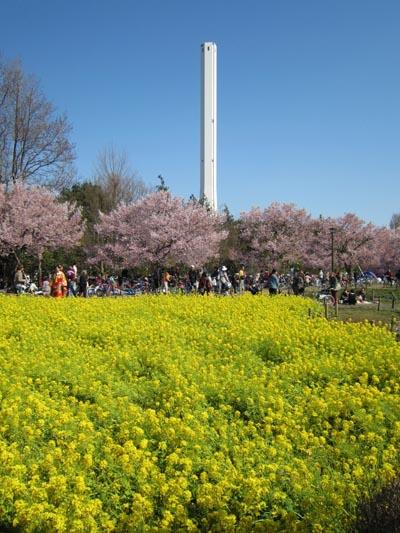 芦花公園②