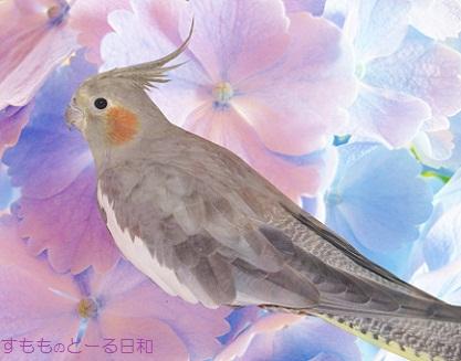 かわい鳥ぺこちゃん