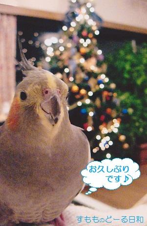 クリスマスペコちゃん