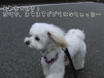 びくびくお散歩!?