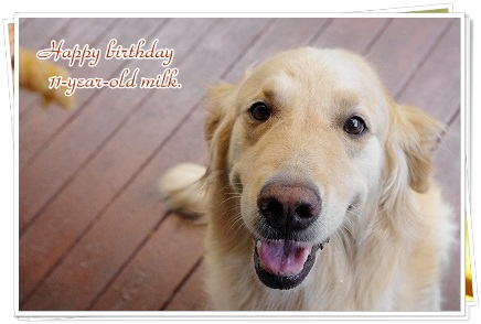 11歳のお誕生日おめでとう!