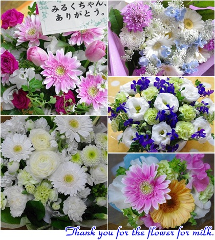 みるくの為にお花をありがとうございます!