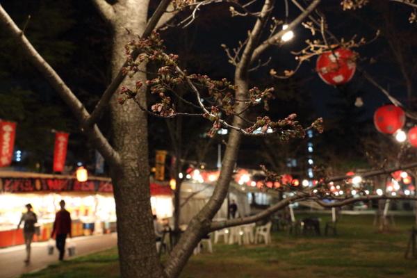 西公園お花見広場の桜1