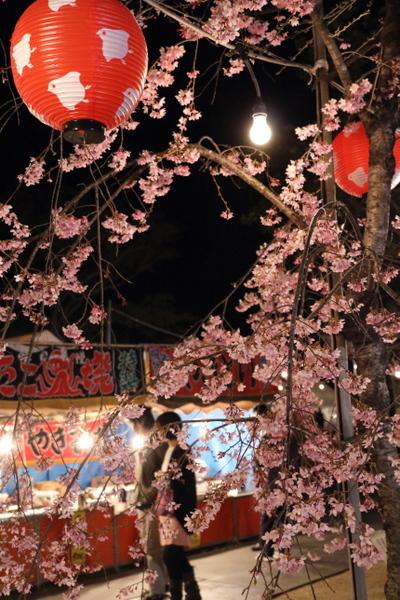 西公園の夜桜4