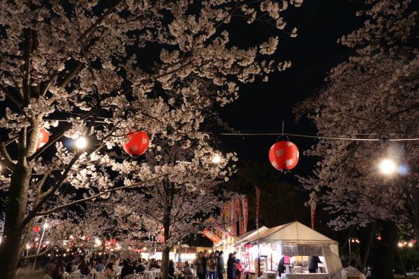 西公園の夜桜3
