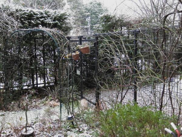 雪の横浜の庭