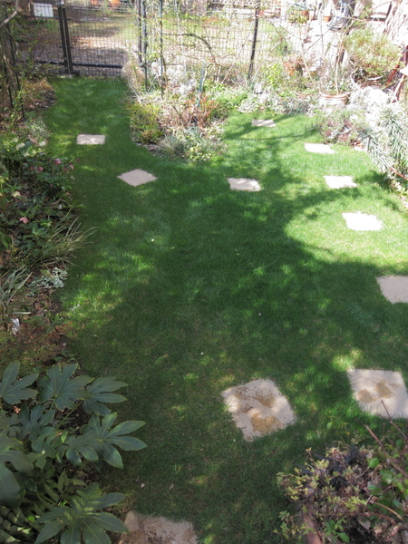 横浜の庭 西洋芝