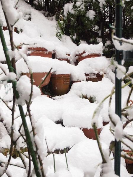 大雪の庭3