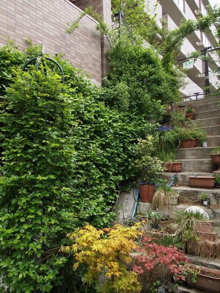 横浜の庭・階段脇
