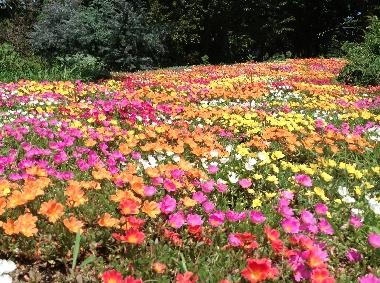 四季の花0805