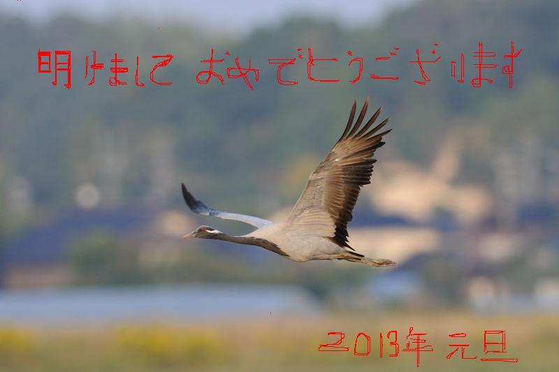 DSC_1258-241021七尾アネハヅル-B