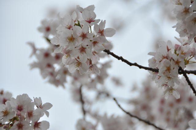 花よりだんごフェアin浜名湖サービスエリア 2