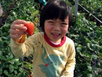 イチゴ狩り④