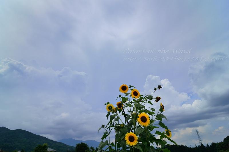 himawari02.jpg