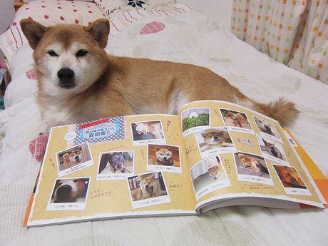犬ブログの常連さんたちも♪