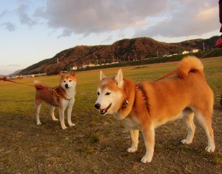 小夏さんと散歩