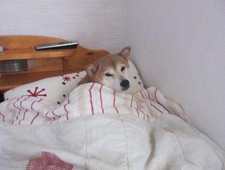 寝心地サイコー!