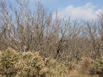 枯れ木並木