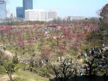 大阪城梅2