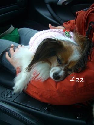 dogcafe1003-3.jpg