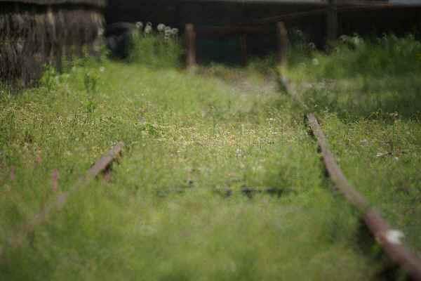 レフ採銅所廃線