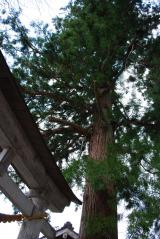 白川八幡神社にて
