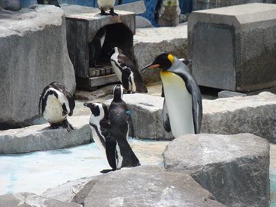 100504ペンギン