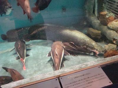 100917水族館②