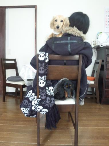 エリちゃん椅子BS