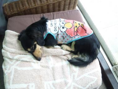 ニコ寝んねbs