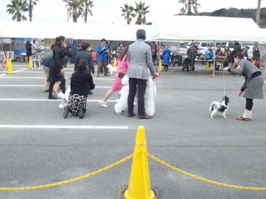 dog show bs