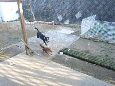 庭遊び1bs