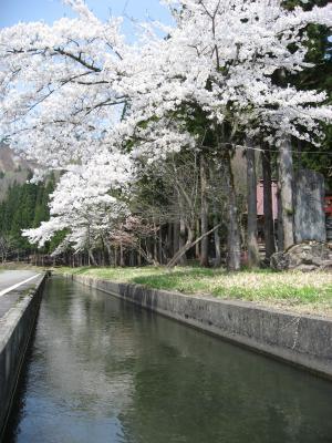 2009滝神社の桜