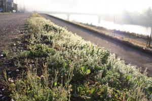 朝露にぬれた春の野草